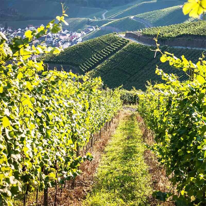 Weinherstellung - Ausbau