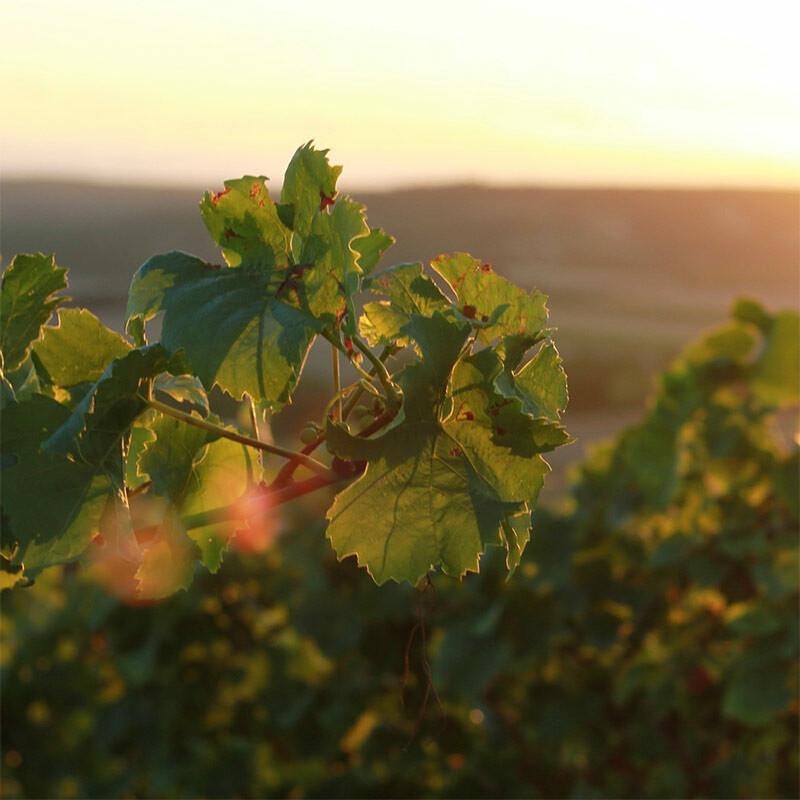 Weine aus Beerenauslese