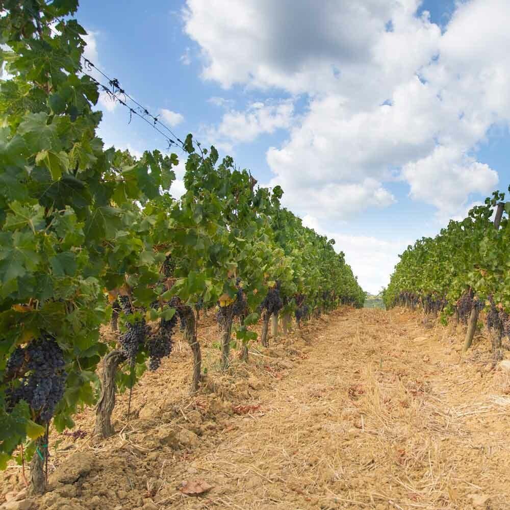 Weinlagen in der Weinanbauregion Franken