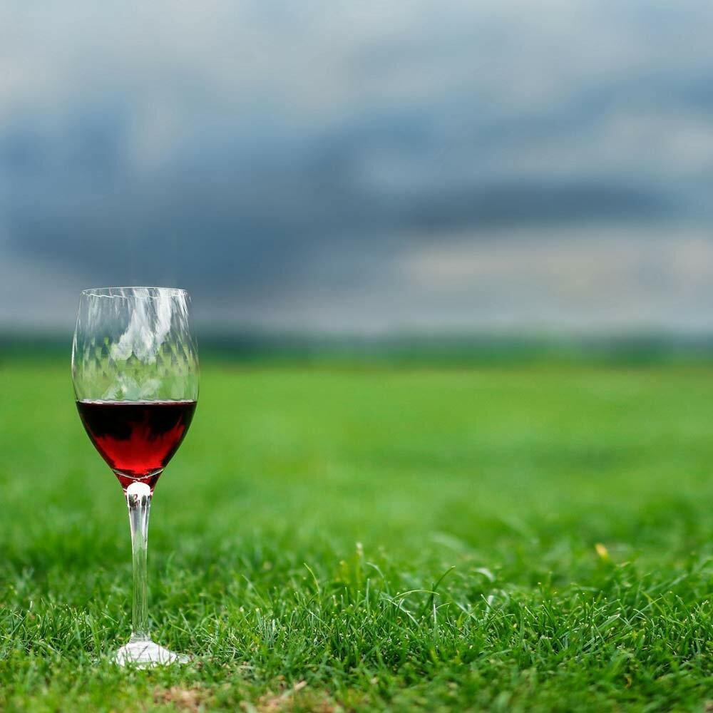 Winzerwissen - Begrünung von Weinfeldern