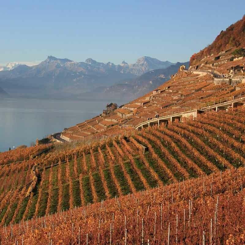 Wein von Deutschlands besten Lagen