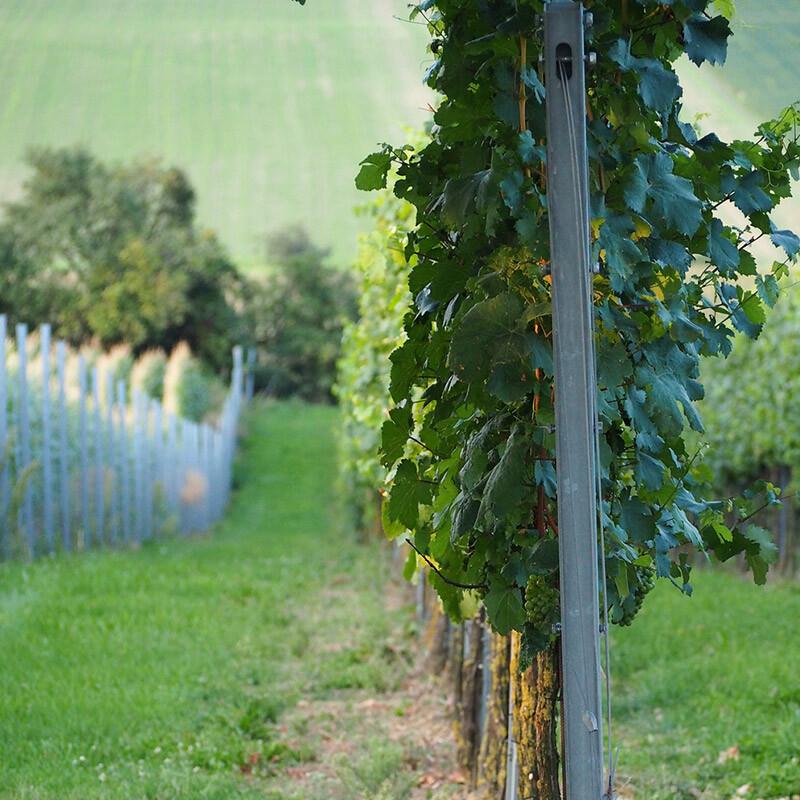 qualitaetswein aus deutschland kaufen
