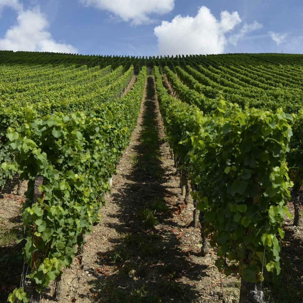 QmP Wein kaufen