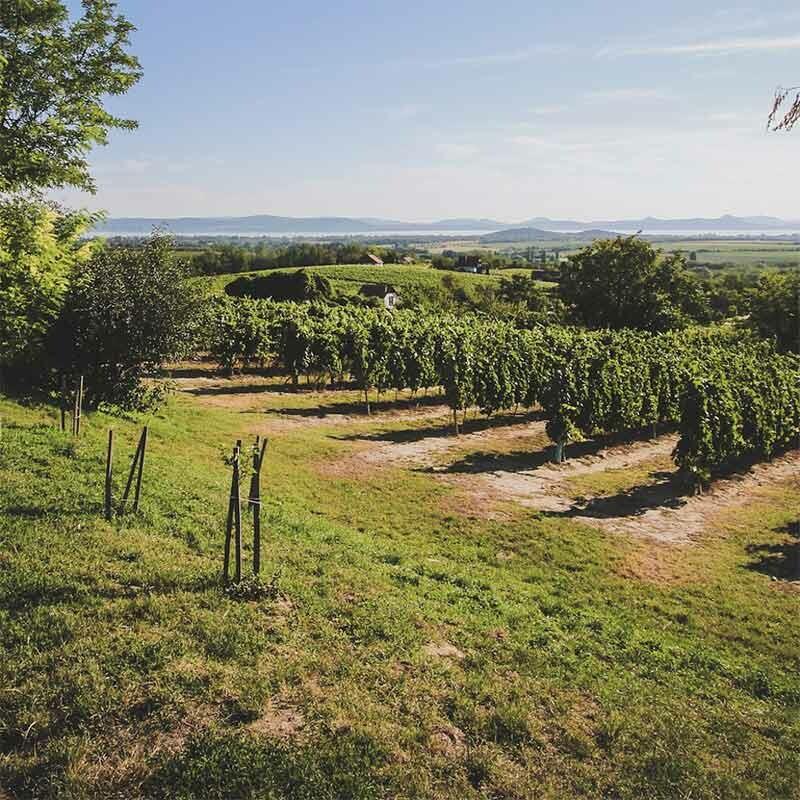 Weinbereiche - Weingebiete