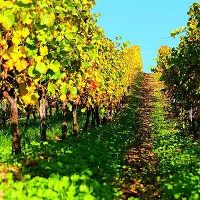 Landwein aus deutschen Anbaugebieten