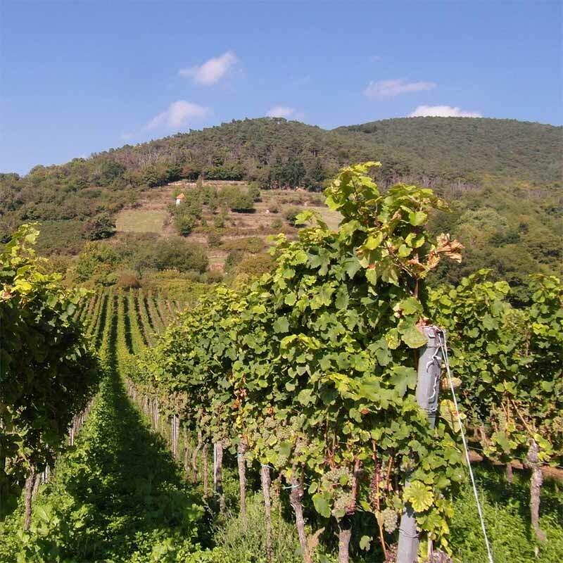 Tafelwein aus deutschen Weinanbaugebieten