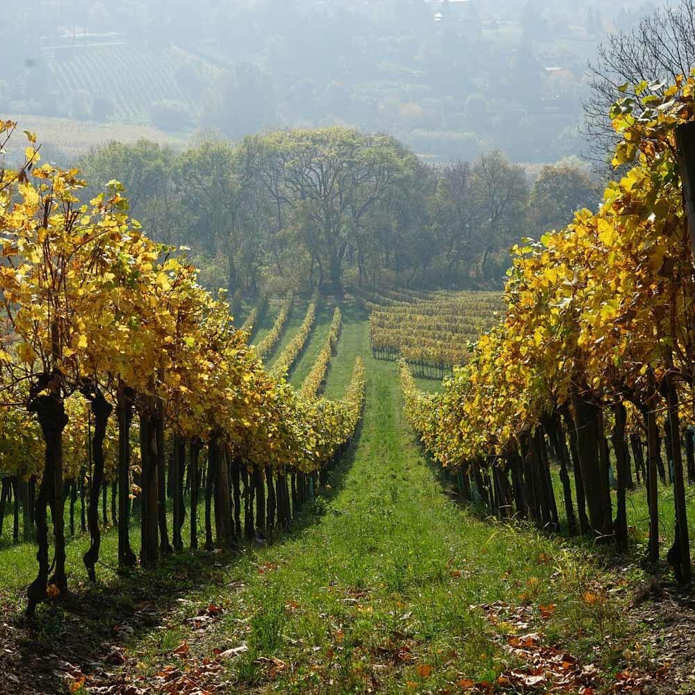 Die besten Weine Deutschlands kaufen - Großes Gewächs