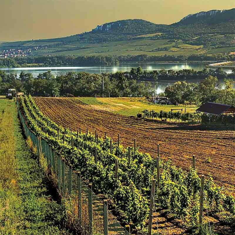DC Pfalz Wein kaufen