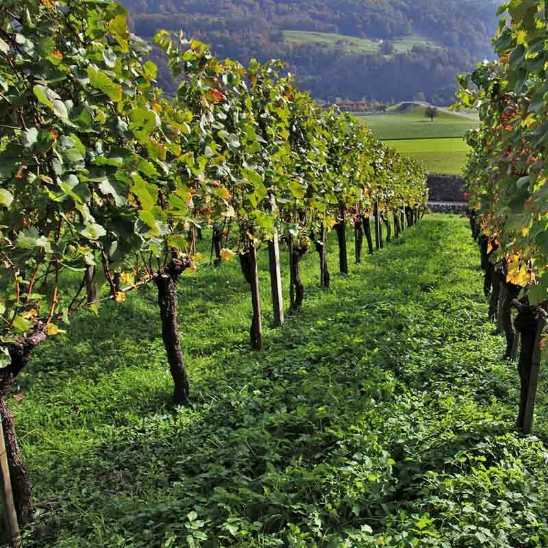 Spitzenwein aus Deutschland kaufen