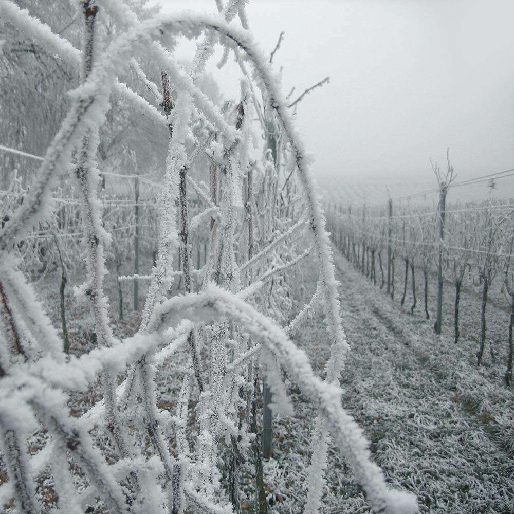 Lagerung von Wein - Edelstahltanks