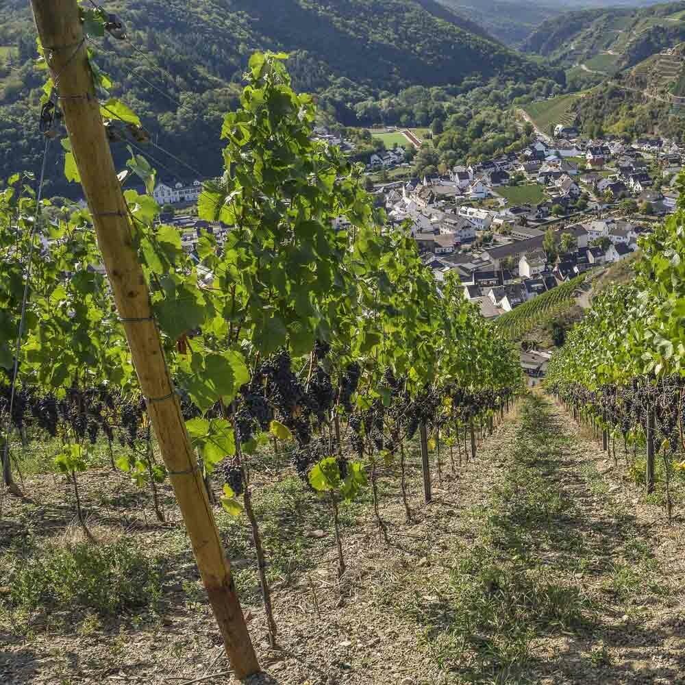 Feinherber Wein aus Rheinhessen