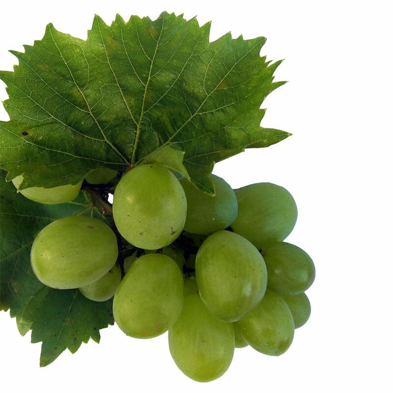 Veltliner - leichter Weingenuss