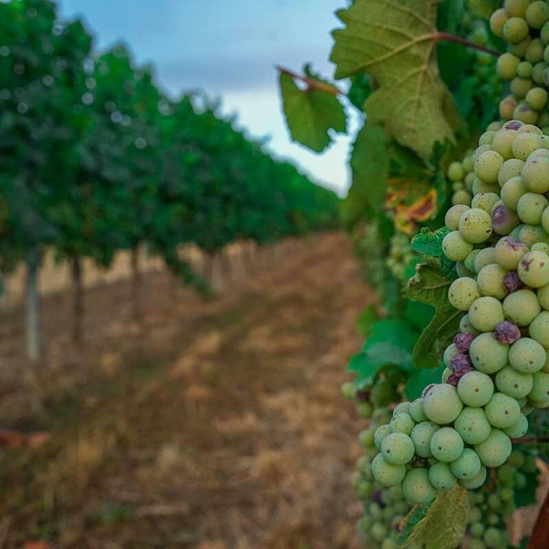 Kann man den Boden im Wein schmecken
