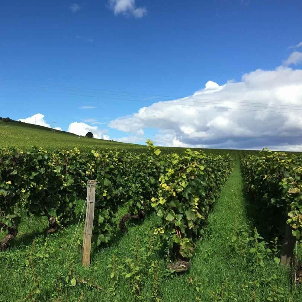 Bodenarten beim Weinbau - Keuper