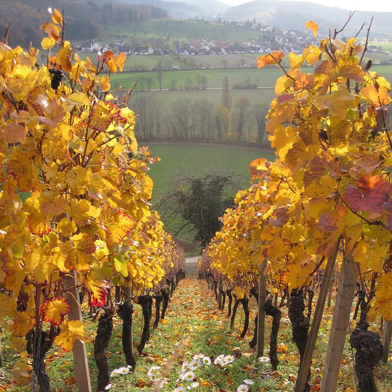 weisswein und rotwein kaufen