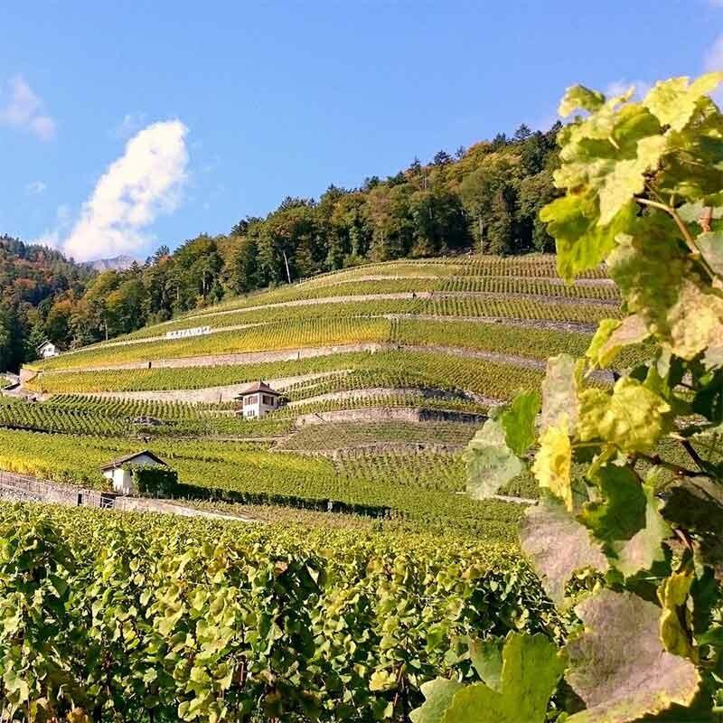 Lieblicher Wein aus Rheinhessen