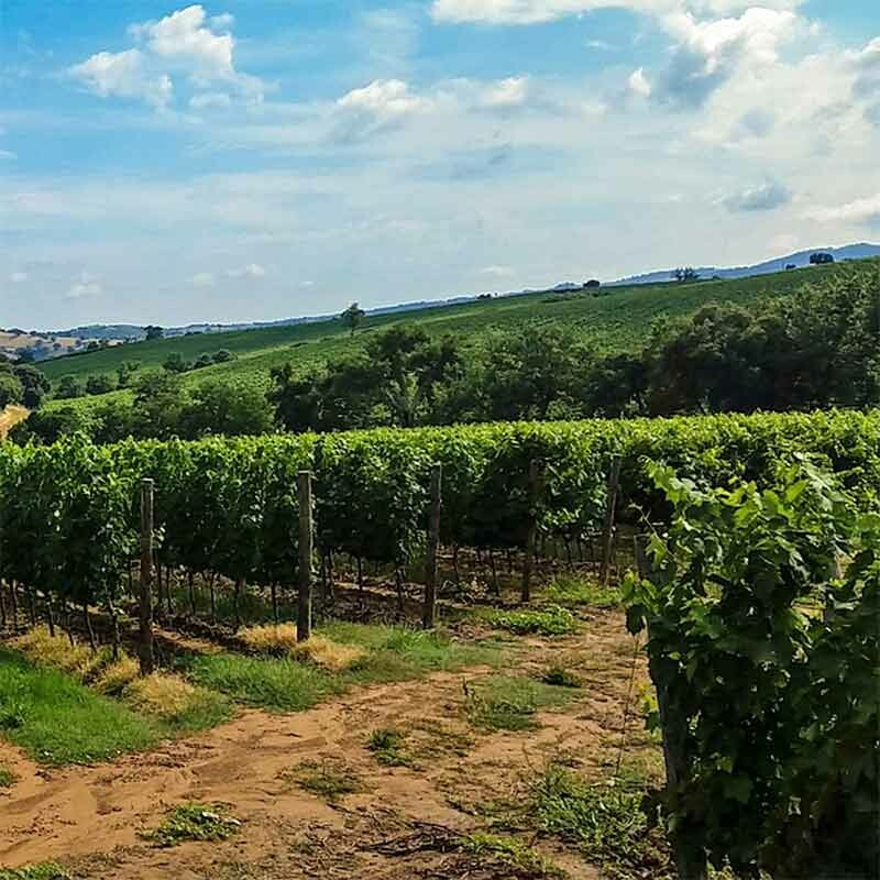 Lössboden im deutschen Weinbau