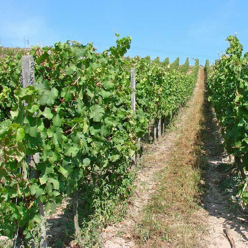 Deutscher Weinbau - Boden