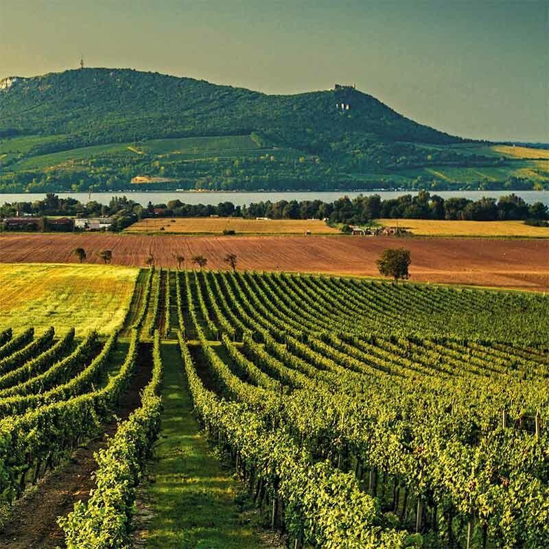 Wein Prädikatstypen in Deutschland
