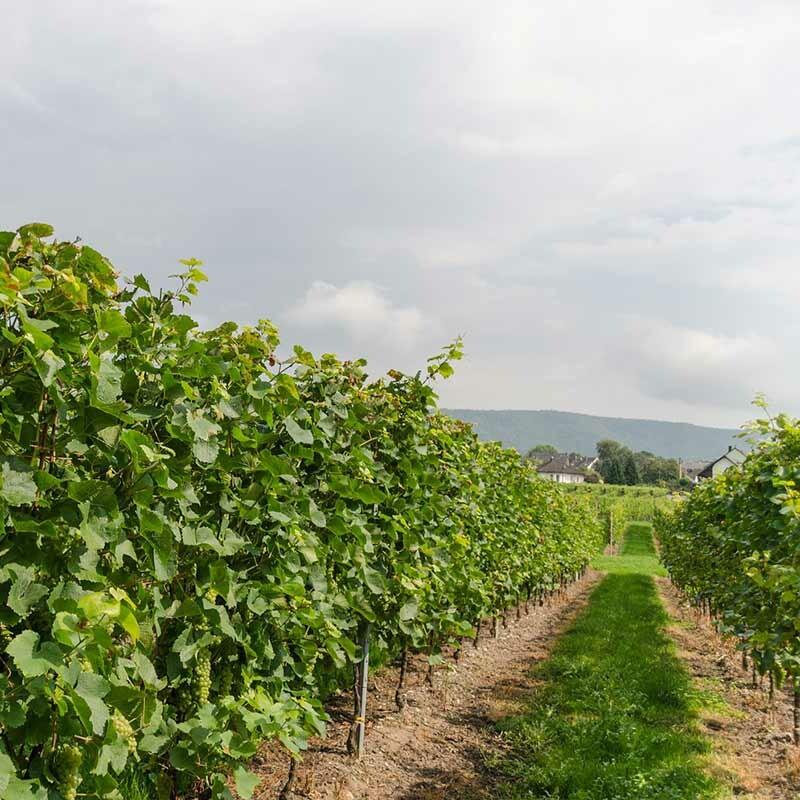 Professioneller Weinbau - Boden