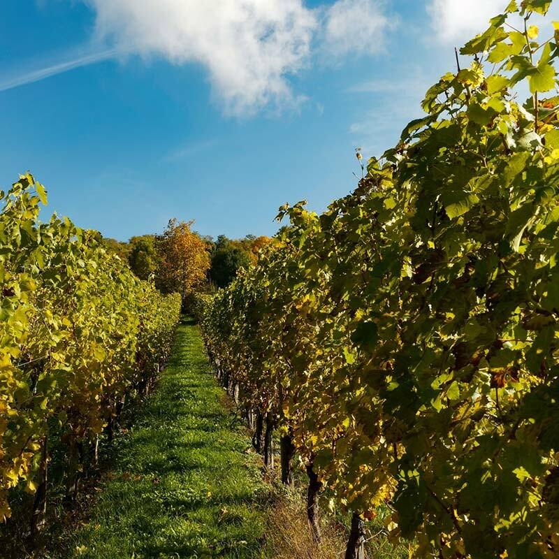 Edelwein aus Deutschland kaufen