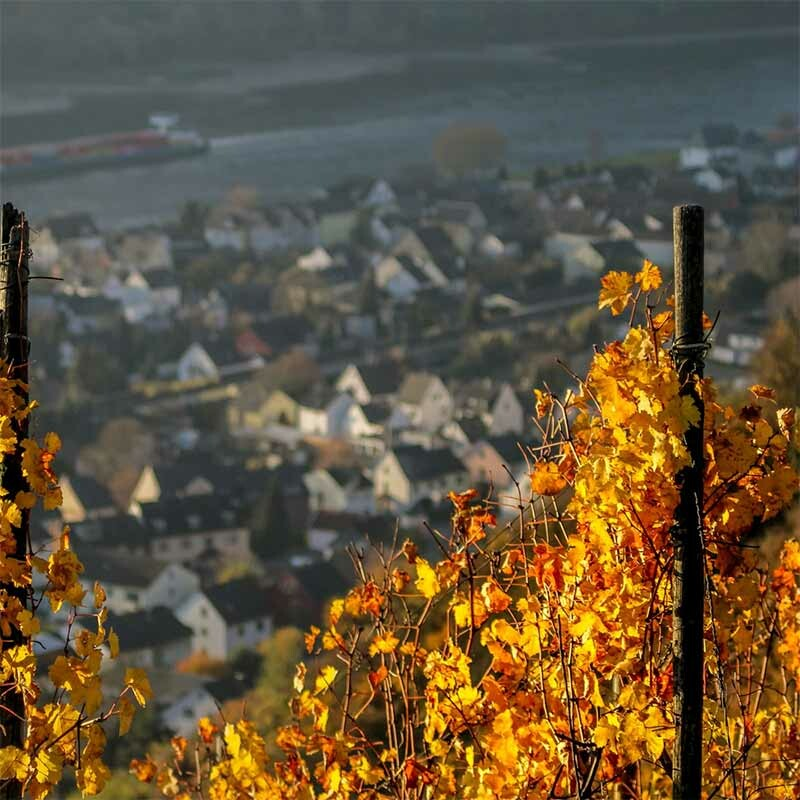 Die schönsten Hanggebiete deutscher Weinanbaugebiete