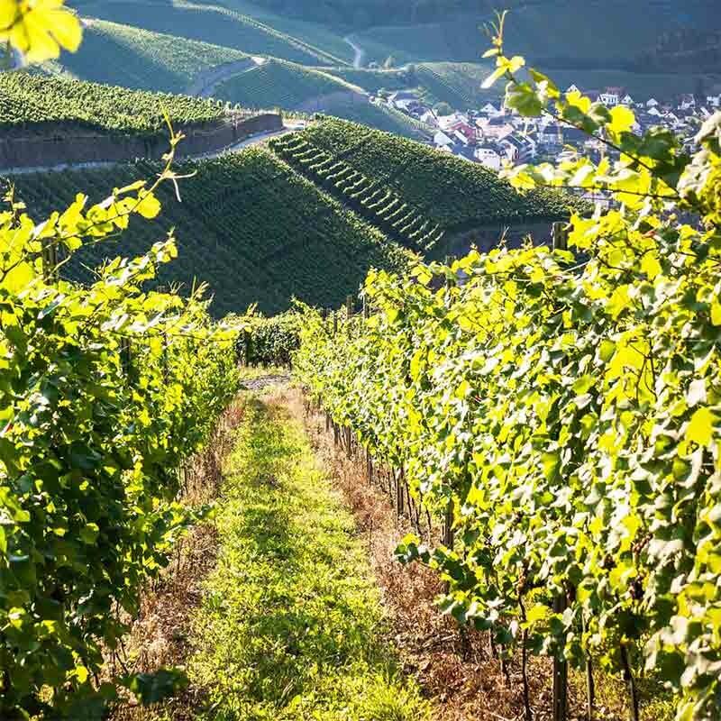 Süßer Wein aus Deutschland