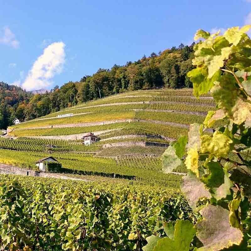 Grundlagen für professionellen Weinbau - Terroir