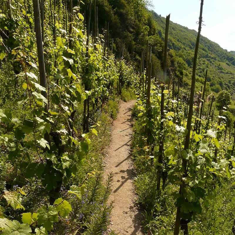 Magische Orte im Weinanbaugebiet Franken - Terroir f