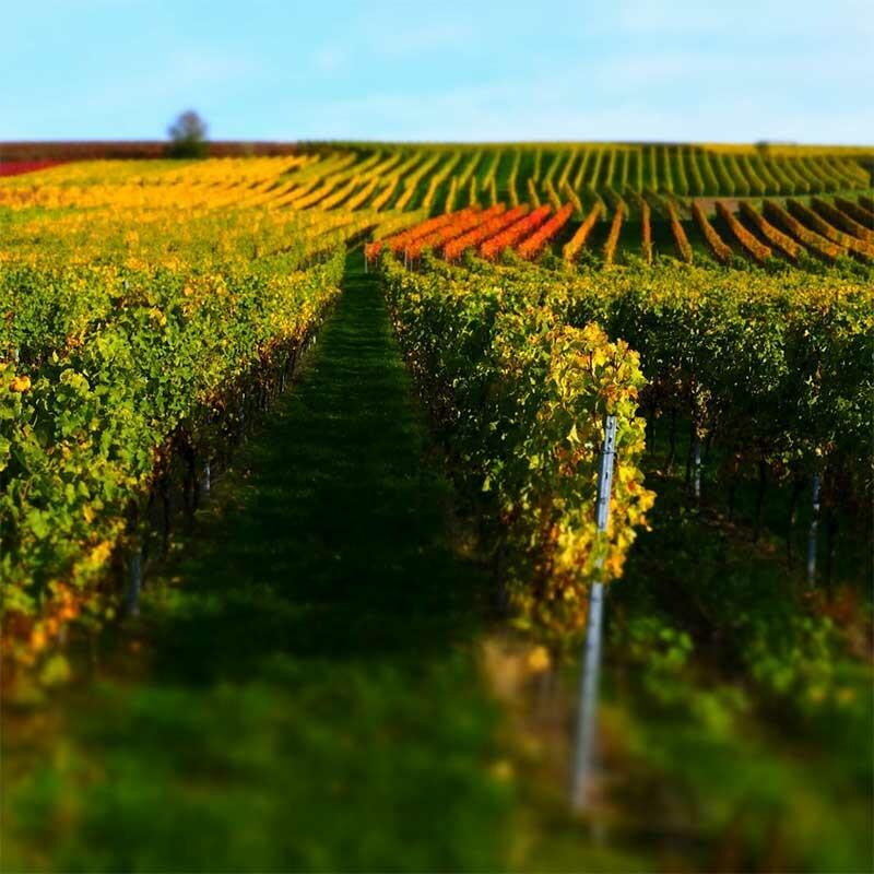 Fruchtsaft zu Wein - Most