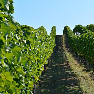 Die besten Weine aus Deutschland - VDP.Erste Lage