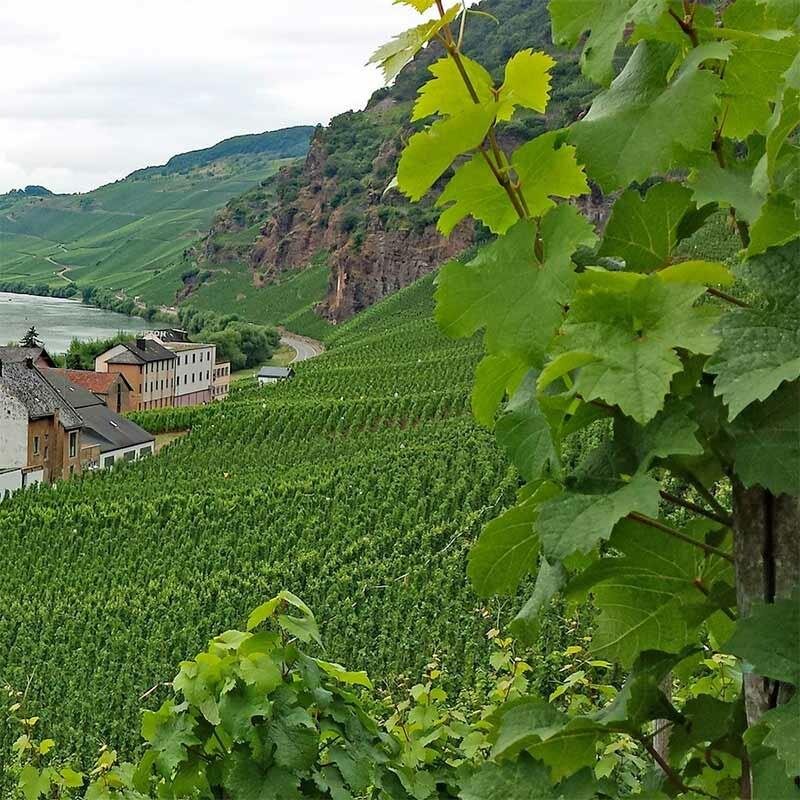 VDP.Gutswein - Qualitätskriterium deutscher Weine