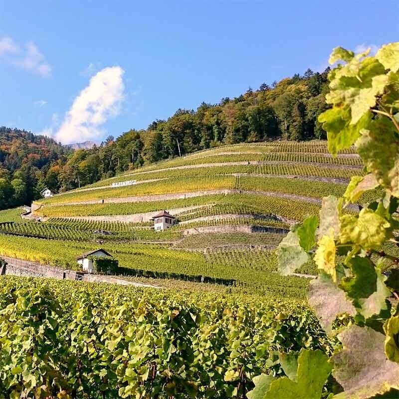 Weinherstellung - Rebsorten