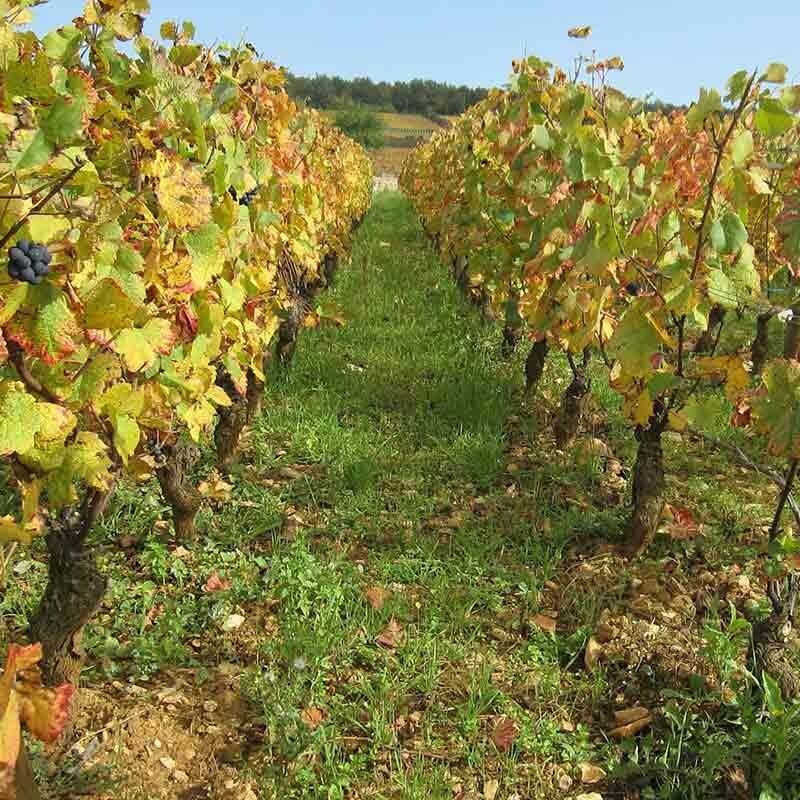 Wie schmeckt Wein vom Buntsandstein