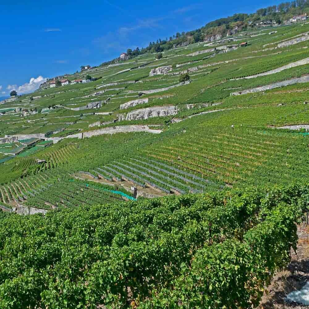 Wein aus Baden kaufen