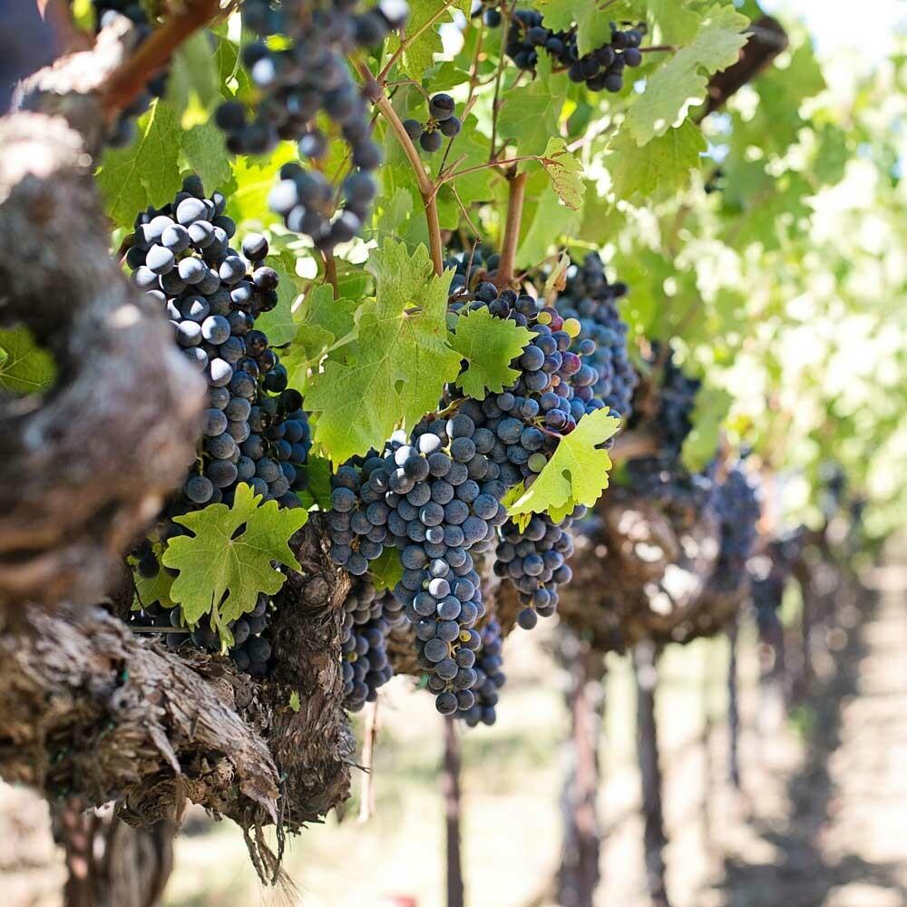 Einzellagen in deutschen Weinanbaugebieten