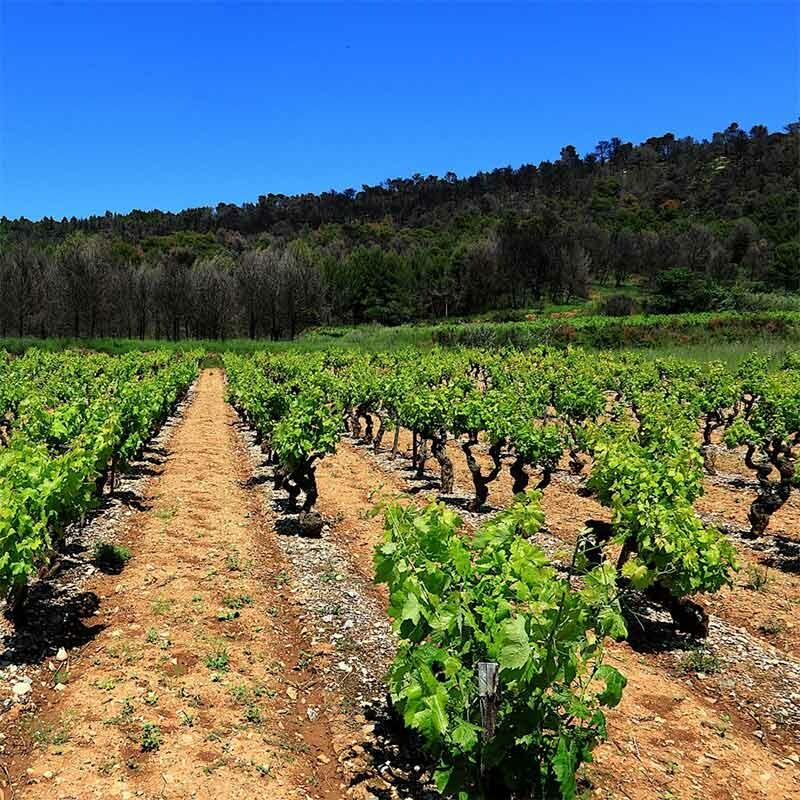 Weinlagen in Franken