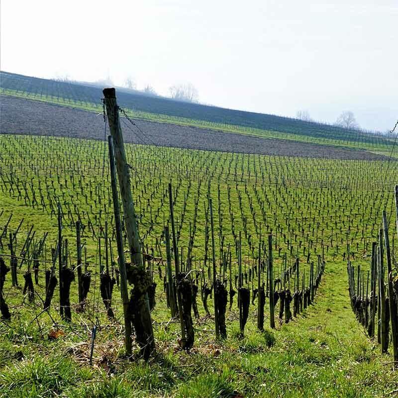 Weinherstellung - wie vom Winzer gemacht