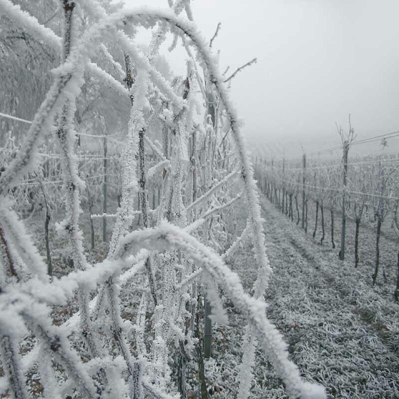 Hat das Wetter Einfluss auf den Wein-Geschmack