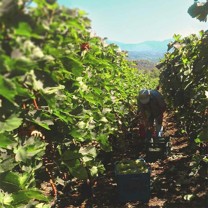 Weinerstellung in Deutschland